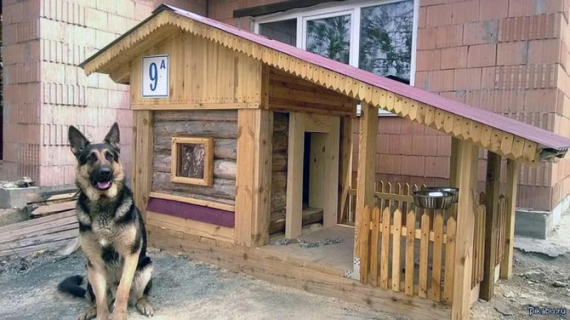 Правильный выбор места для установки собачьей будки имеет значение для питомца